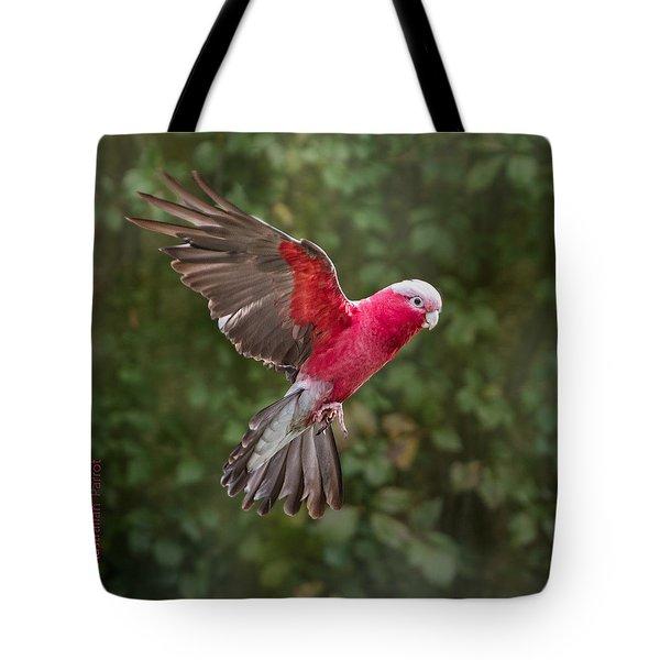 Australian Galah Parrot In Flight Tote Bag