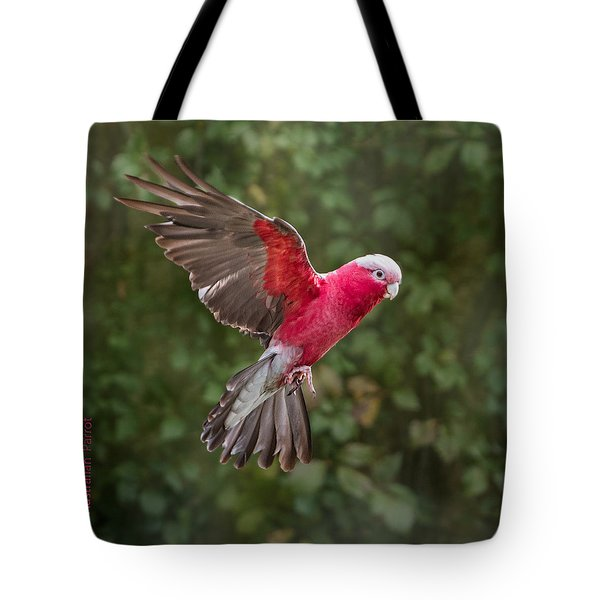 Australian Galah Parrot In Flight Tote Bag