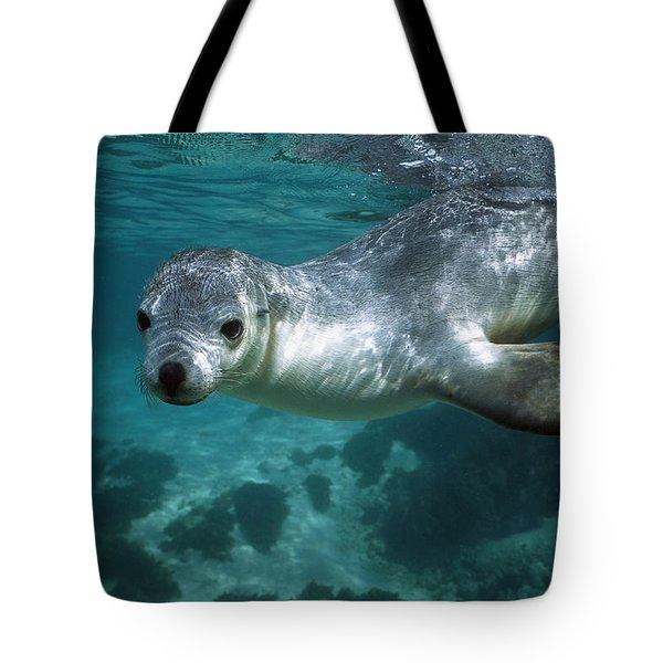 Australian Sea Lion Neophoca Cinerea Tote Bag by Hiroya Minakuchi