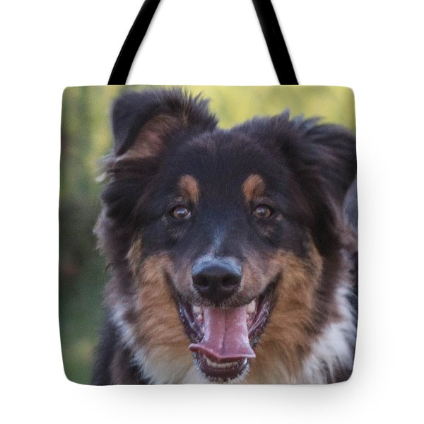 Tote Bag featuring the photograph Australian Shepherd by Cathy Donohoue