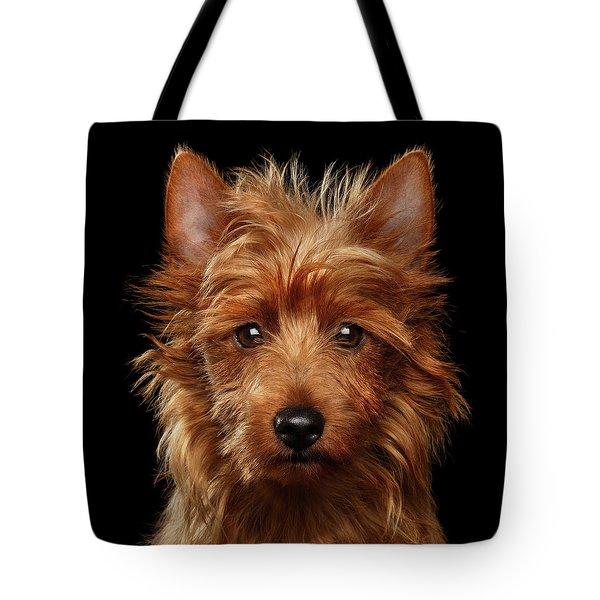 Australian Terrier Tote Bag by Sergey Taran