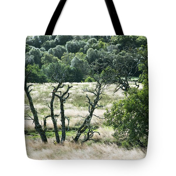 Autumn And Grass In Isle Of Skye, Uk Tote Bag by Dubi Roman