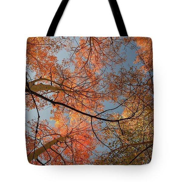 Autumn Aspens In The Sky Tote Bag