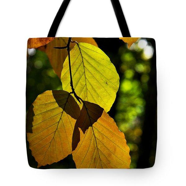 Autumn Beech Tree Leaves Tote Bag
