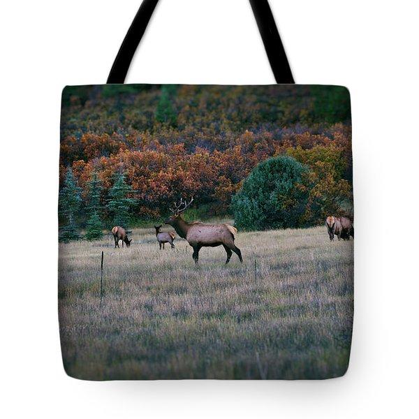 Autumn Bull Elk Tote Bag