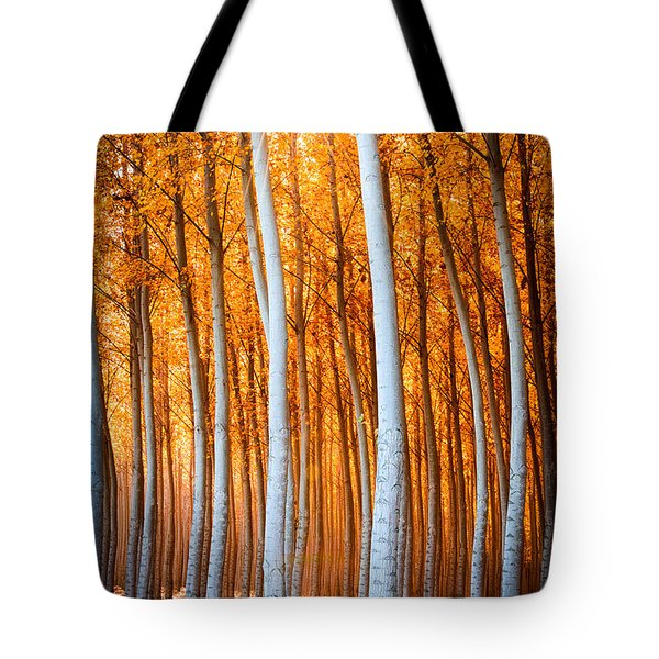 Autumn Canopy Burst Tote Bag