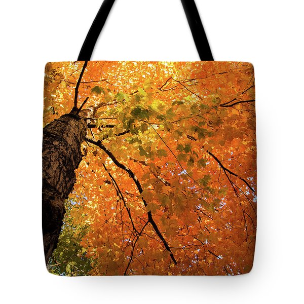 Autumn Canopy In Maine Tote Bag