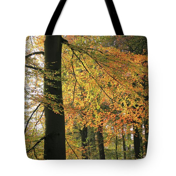 Autumn Colored Trees In Forest Tote Bag
