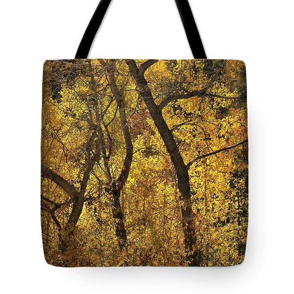 Autumn Cottonwood Thicket Tote Bag