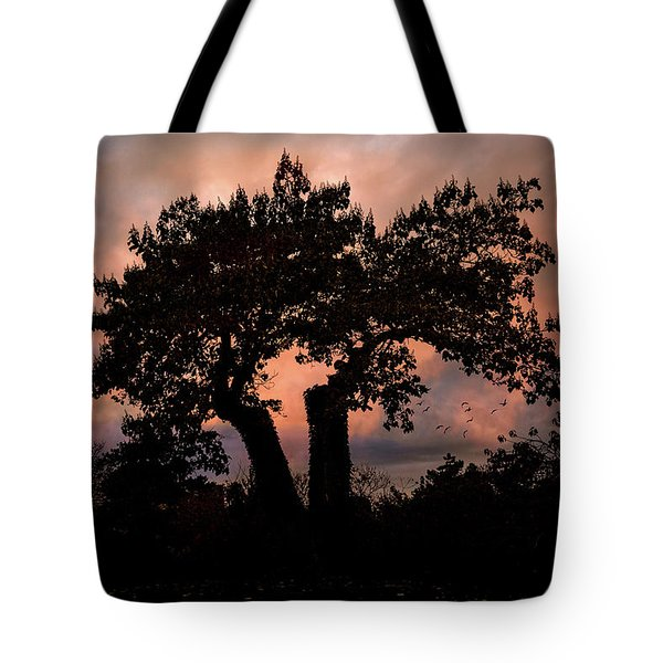 Tote Bag featuring the photograph Autumn Evening Sunset Silhouette by Chris Lord