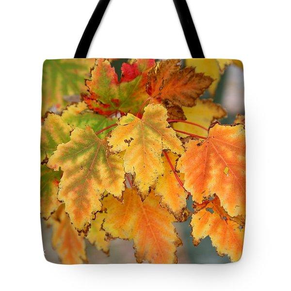 Autumn Fire Tote Bag by John Loreaux