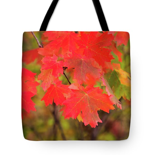 Tote Bag featuring the photograph Autumn Flash by Bryan Carter