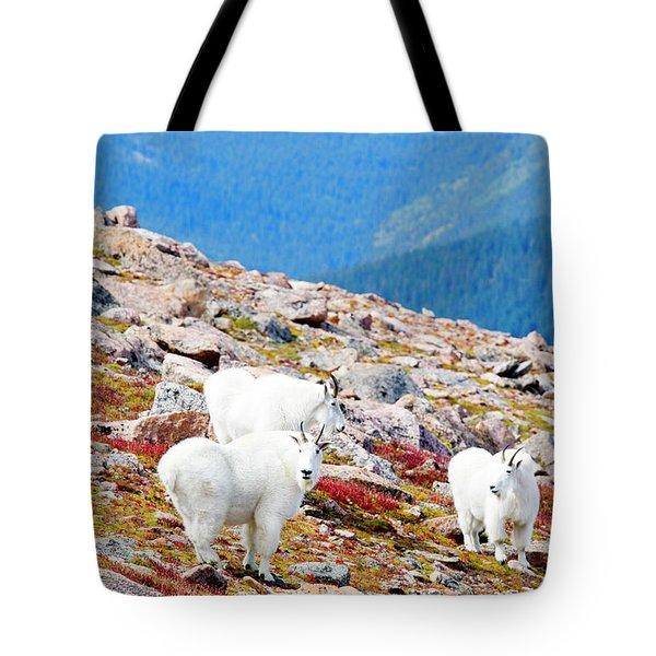 Autumn Goats On Mount Bierstadt Tote Bag