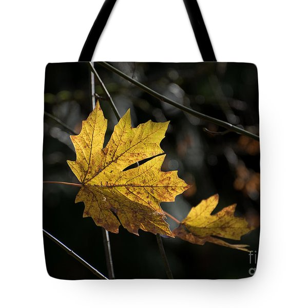 Tote Bag featuring the photograph Autumn Highlight by MaryJane Armstrong