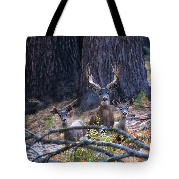 Tote Bag featuring the photograph Autumn In The Yosemite High Country by Vincent Bonafede