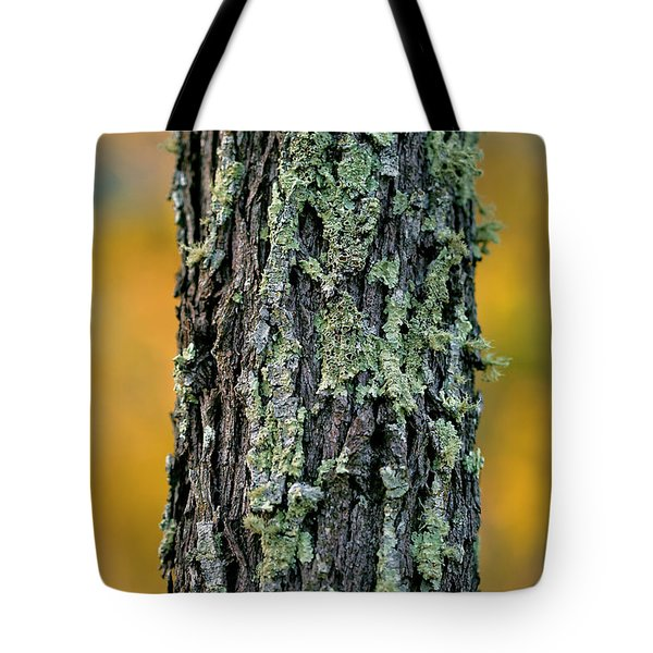 Autumn Ironbark Tote Bag