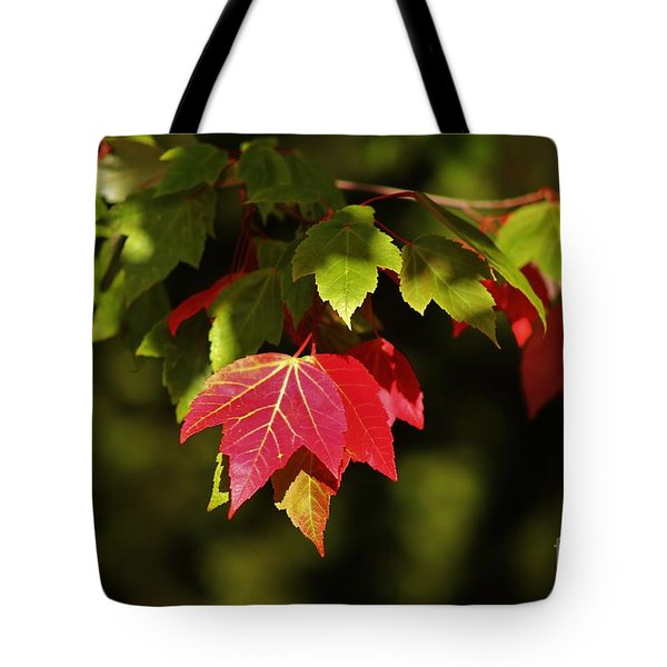 Autumn Leaves Tote Bag by Craig Wood