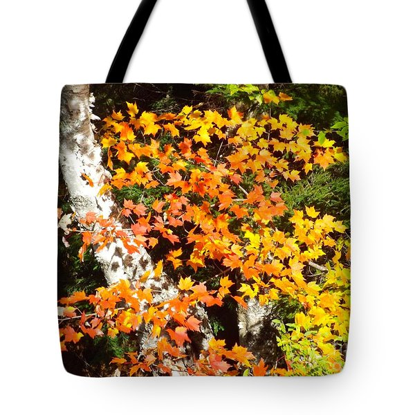 Autumn Maple Tote Bag