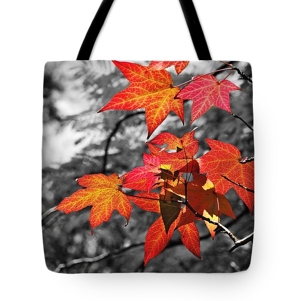 Autumn On Black And White Tote Bag by Kaye Menner