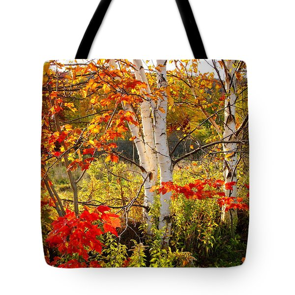 Autumn Scene With Red Leaves And White Birch Trees, Nova Scotia Tote Bag