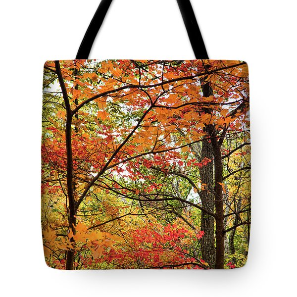 Tote Bag featuring the photograph Autumn Splendor Fall Colors Leaves And Trees by Dan Carmichael