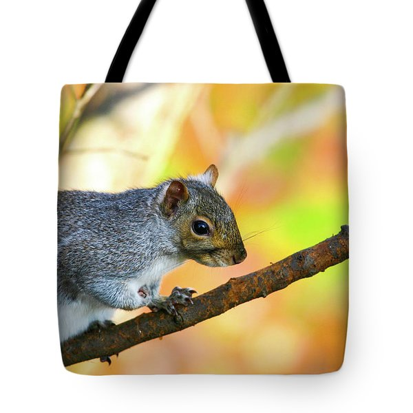 Tote Bag featuring the photograph Autumn Squirrel by Karol Livote