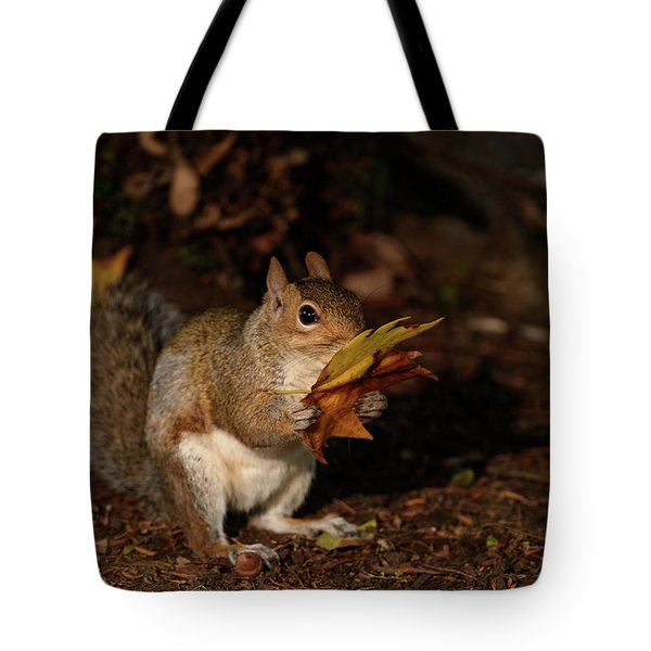 Autumn Squirrel Tote Bag by Matt Malloy
