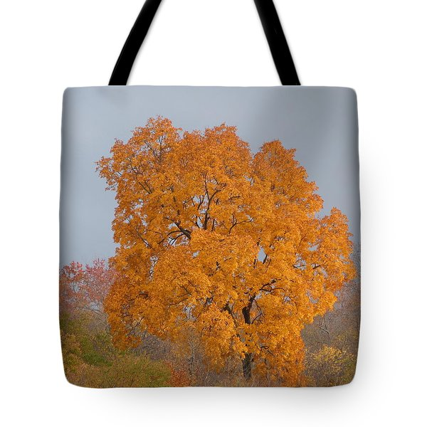 Autumn Tree Tote Bag by Donald C Morgan