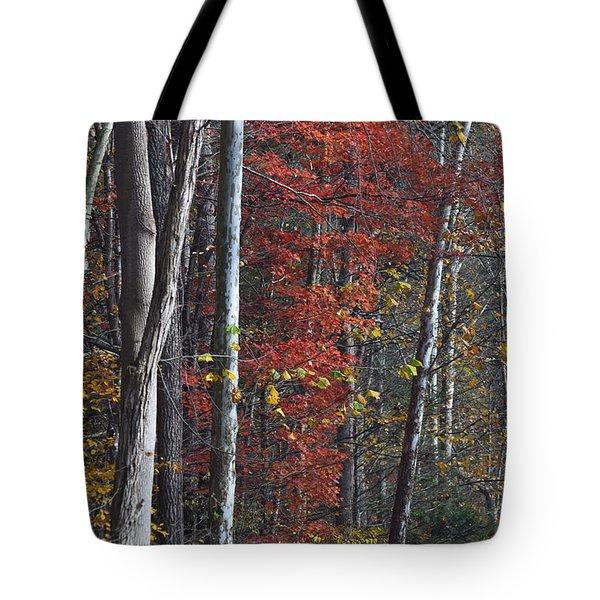 Autumn Trees 8261c Tote Bag