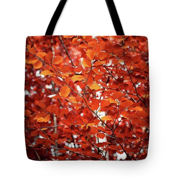 Autumn Triumph Tote Bag
