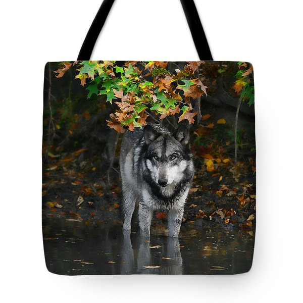 Tote Bag featuring the photograph Autumn Wolf by Shari Jardina