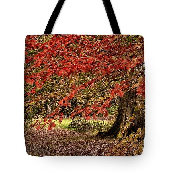 Autumn Woodland Color Tote Bag