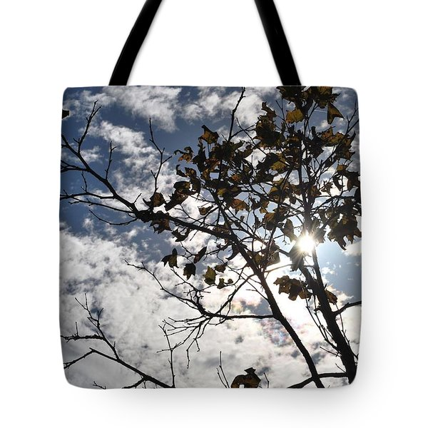 Autumn Yellow Back-lit Tree Branch Tote Bag