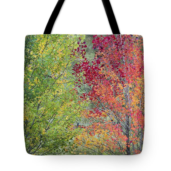 Autumnal Aspen Trees Tote Bag