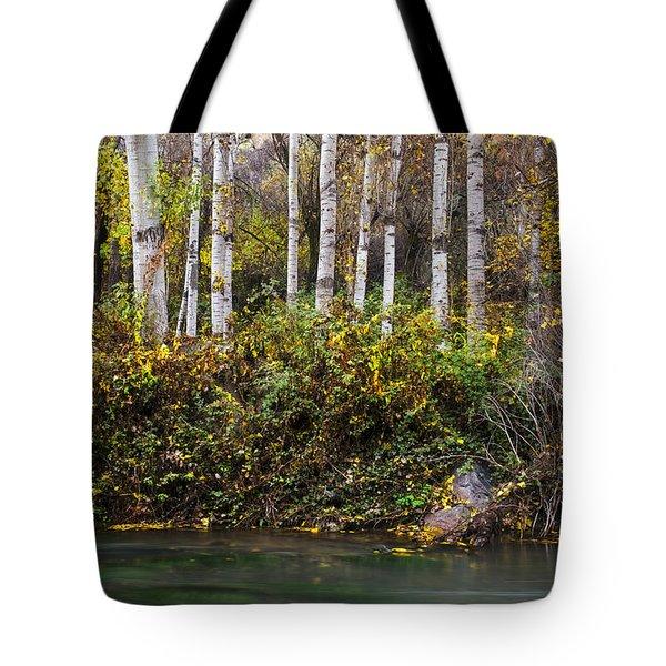 Autumnal Birches Tote Bag by Yuri Santin