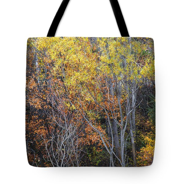 Tote Bag featuring the photograph Autumnal Color Dance by Yuri Santin