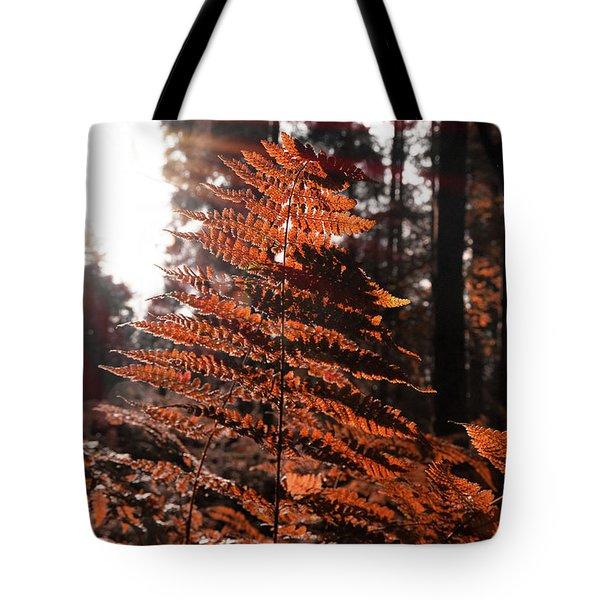 Autumnal Evening Tote Bag