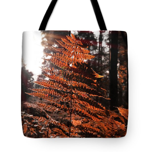Autumnal Evening Tote Bag