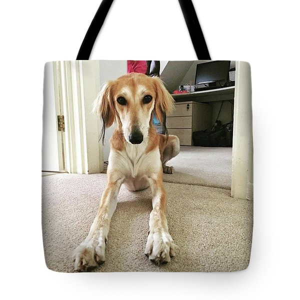 Ava On Her First Birthday #saluki Tote Bag by John Edwards