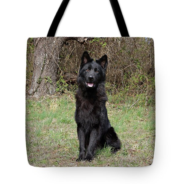 Tote Bag featuring the photograph Aziza Sitting by Sandy Keeton