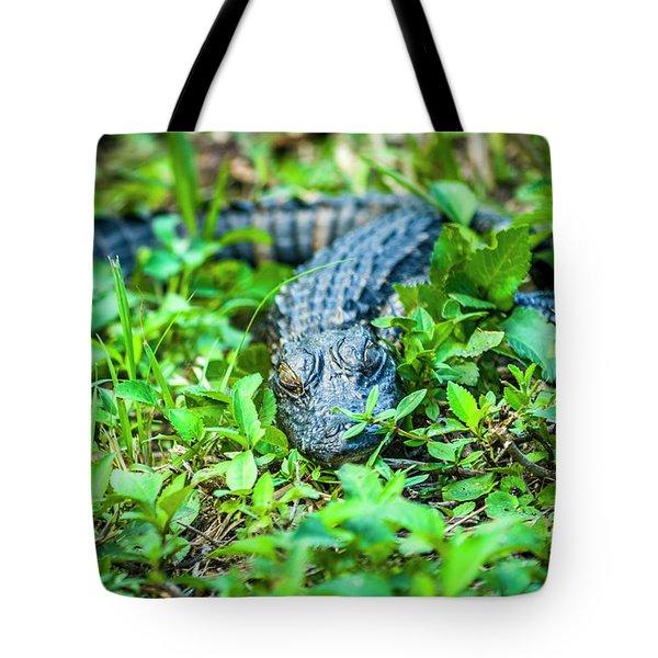 Baby Alligator Tote Bag