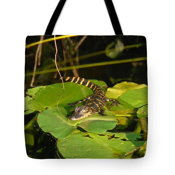 Baby Alligator Tote Bag by David Lee Thompson