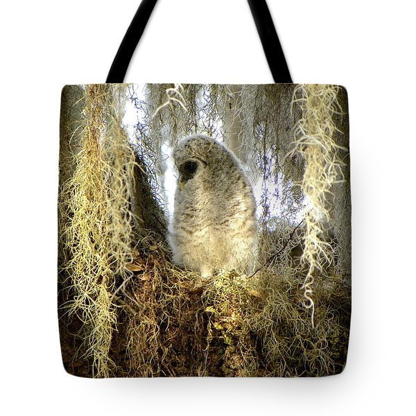 Baby Barred Owl 000 Tote Bag by Chris Mercer