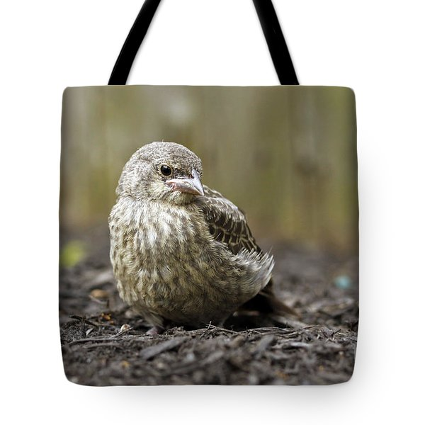 Tote Bag featuring the photograph Baby Bird by Denise Pohl