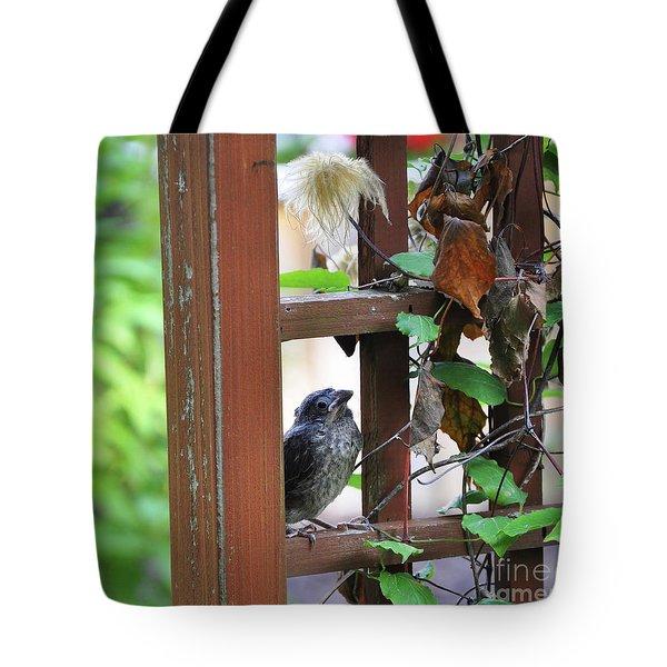 Baby Bird Sitting Tote Bag