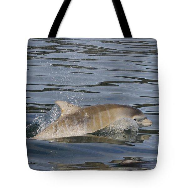 Baby Bottlenose Dolphin - Scotland  #35 Tote Bag