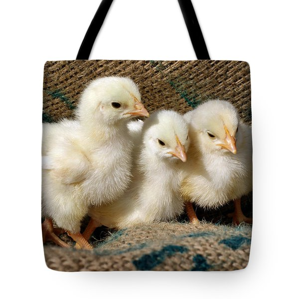 Baby Chicks Tote Bag