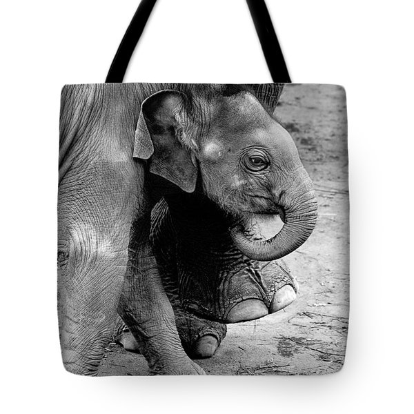 Baby Elephant Security Tote Bag