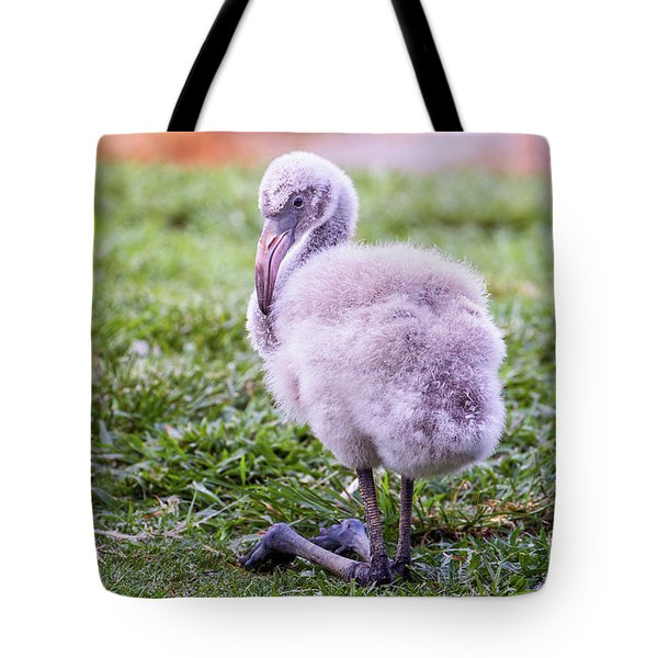 Baby Flamingo Sitting Tote Bag