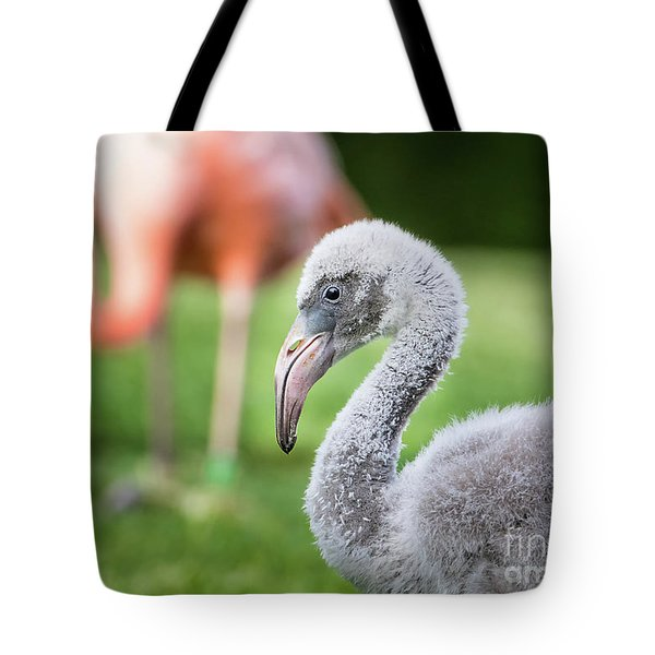 Baby Flamingo With Mom In Background Tote Bag by Stephanie Hayes